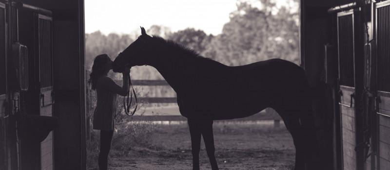 CUENTO: el caballo de Milton Erickson