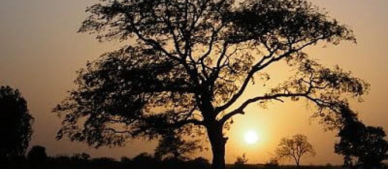 Pels salvadors del món: un arbre és un arbre